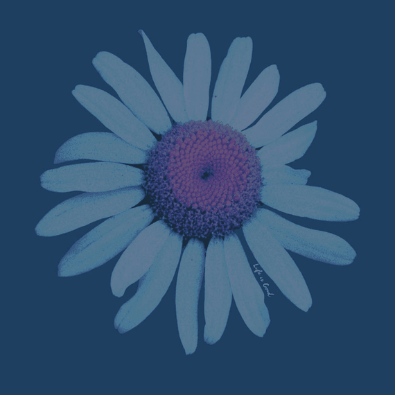 Photoreal Daisy Wall Art